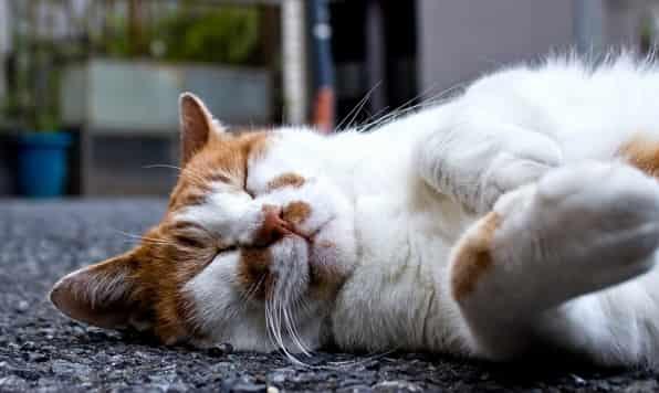 無気力で寝たきり、何もできない時は?